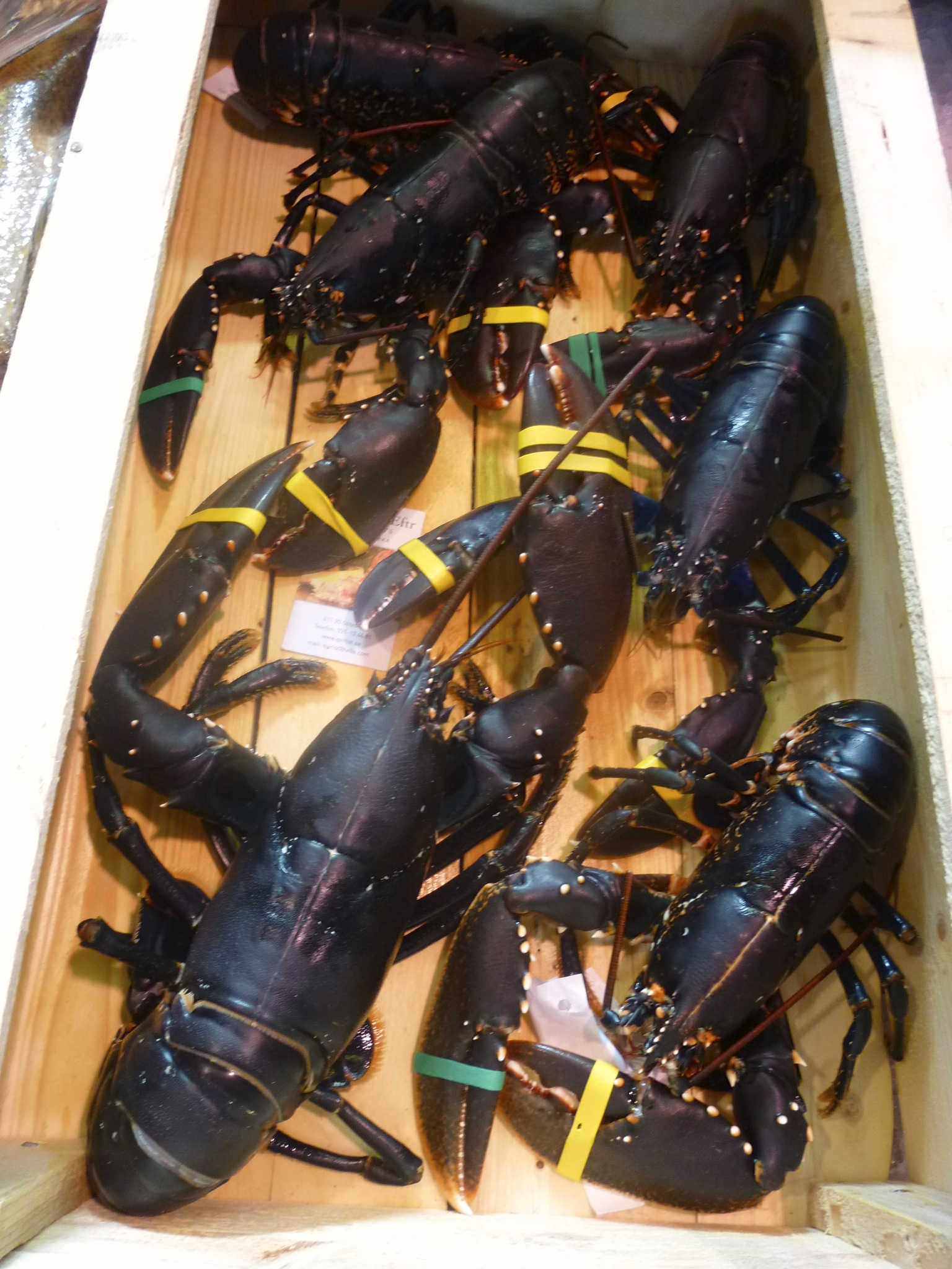Lobster, ready for purchase.